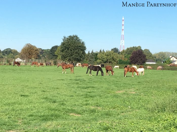 Manege Pareynhof - De paarden