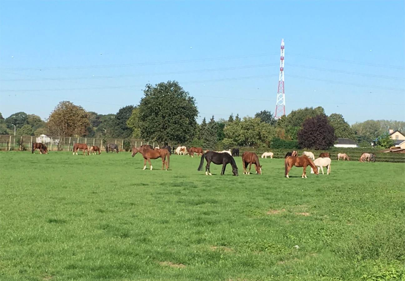 Manege Pareynhof _ onze pony's